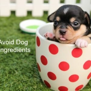 Must-Avoid Dog Food Ingredients